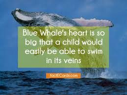 Image result for heart of blue whale