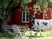 687 Best <b>Farm</b> Life images in 2020 | <b>Farm</b> life, <b>Farm</b>, <b>Country</b> life