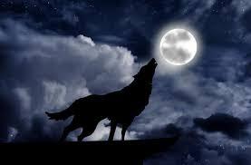 「狼」の画像検索結果