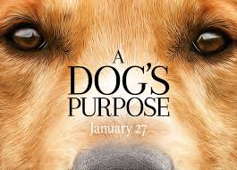 report a dog s purpose movie under investigation for animal report a dog s purpose movie under investigation for animal abuse com