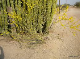 Desierto de Sonora: Gila Images?q=tbn:ANd9GcQF69mQRzAgIoIRQtu_PYDhMzyJ6HF-8sPwM-xg-N07pIyL_rpe