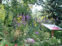 Small Picture Garden Design Garden Design with How to Start a Spring Wildflower
