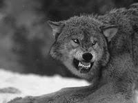 звери: лучшие изображения (113) в 2020 г. | Животные, Милые ...