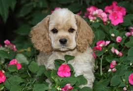 Ποιοι σκύλοι βελτιώνουν τα αυτιστικά παιδιά;
