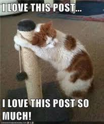 Wonderful World of Memes on Pinterest | Pet Portraits, Meme and ... via Relatably.com