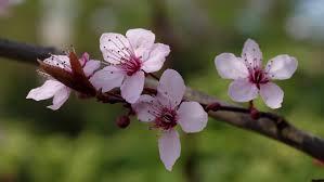 """Résultat de recherche d'images pour """"printemps fleurs"""""""