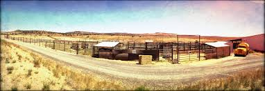 straight from the horse s heart blm hines holding facility home of frankenstein sterilization experiments photo by r t fitch of