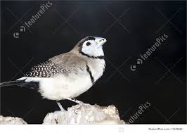 Image result for perched bird