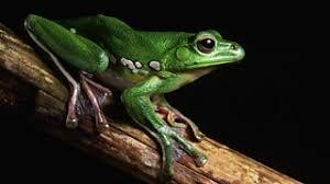 Tropical rainforests - AQA - Revision 2 - GCSE Geography - BBC ...