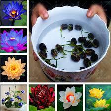 Online Shop <b>5 pcs</b> Aquatic Plants Flower <b>Bowl Lotus</b> Water Lilies ...
