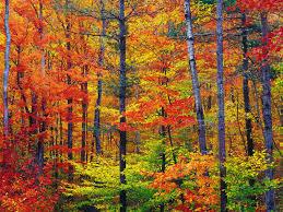 Resultado de imagen de Colores de otoño