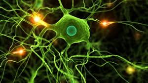 Research Shows that Neurochemical Imbalances Cause Higher PTSD Susceptibility