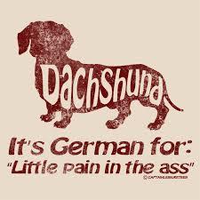 It's German for what? | <b>Funny dachshund</b>, <b>Dachshund</b> decor ...