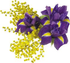 """Résultat de recherche d'images pour """"gifs fleurs mimosas"""""""