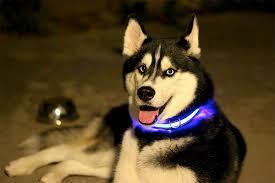 Правила выгула собак в городе