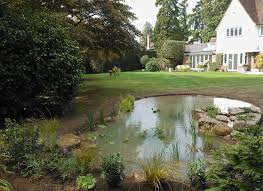 Small Picture Wildlife Pond in Esher Surrey The Claudia de Yong Blog
