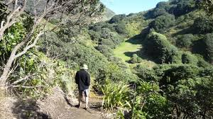 Image result for the GAP piha