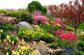 Colors That Attract <b>Birds</b> - Bird-Friendly Landscaping
