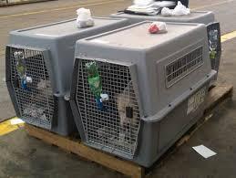 El Gobierno aprueba el nuevo marco para el movimiento comercial de mascotas en la UE