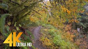 <b>Autumn Forest</b> Walk in 4K | 2.5 HRS Nature Video with Nature ...