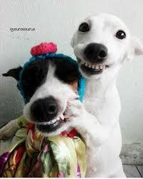 Myndaniðurstaða fyrir smiling dogs