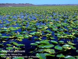 Image result for wetland pond plants