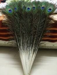 Wholesale 10/20/50/100PCS <b>High quality peacock feathers</b> 22 ...