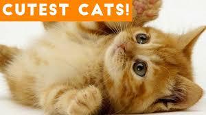 Ultimate <b>Cute</b> and <b>Funny Cat</b> Compilation 2018 | <b>Funny</b> Pet Videos ...