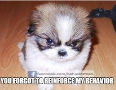 BCBA & Psych Humor on Pinterest | Aba, Applied Behavior Analysis ... via Relatably.com