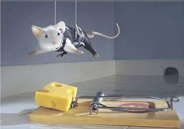 Image result for mouse traps