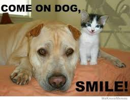 Come On Dog Smile | WeKnowMemes via Relatably.com