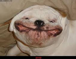 Image result for dogs smiling when they pooped