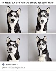 Image result for local funny pics