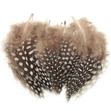 Buy feather guinea and get free shipping on AliExpress.com
