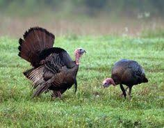 Image result for tennessee wildlife photography by Luke Bell