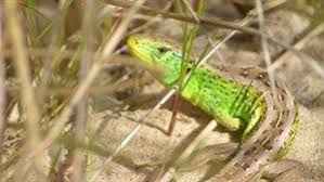 Planning & Development | The Amphibian and <b>Reptile</b> Conservation ...