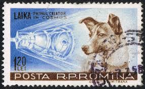 Image result for first animal in space laika