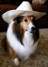 Image result for animals in cowboy hats