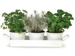 Kitchen Windowsill Herb Garden Achica Living Design Lifestyle Magazine Get Ready To Grow Your