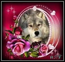 Pin by Sandee Mroczek on Wolve's | Wolf pictures, Wolf wallpaper ...
