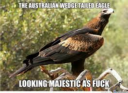 Bored Fact: My Name Means Eaglehawk, Another Word For The Wedge ... via Relatably.com