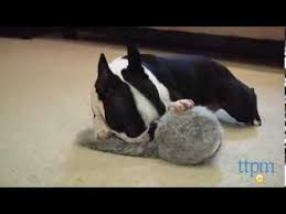 Doggie Tail Wiggly <b>Interactive Dog Toy</b> from Hyper <b>Pet</b> - YouTube