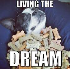 Dog is living the dream | Funny Dirty Adult Jokes, Memes & Pictures via Relatably.com