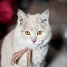 National Geographic <b>Domestic Cat</b>