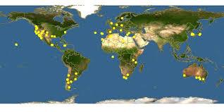 Bromus rigidus - Ripgut Brome -- Discover Life