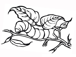 Small Picture Caterpillar Coloring Pages Printable Caterpillar Coloring Pages