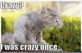 crazy cat meme | Flickr - Photo Sharing! via Relatably.com