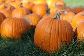 Image result for image pumpkin