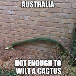 wilted cactus Australia Meme Generator - Imgflip via Relatably.com