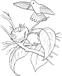 Small Picture Hummingbird Coloring Pages Trend Hummingbird Coloring Pages
